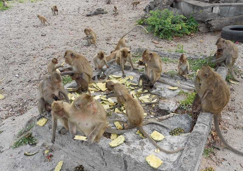 Паттайя Остров обезьян питание