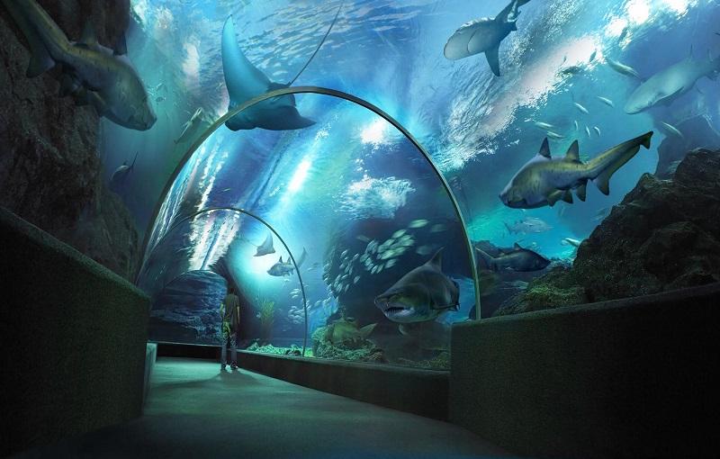 Паттайя океанариум акулы
