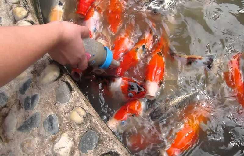 Паттайя океанариум покормить рыб
