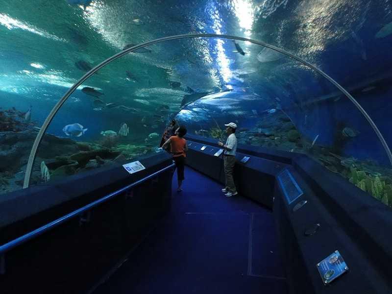Паттайя океанариум туннель