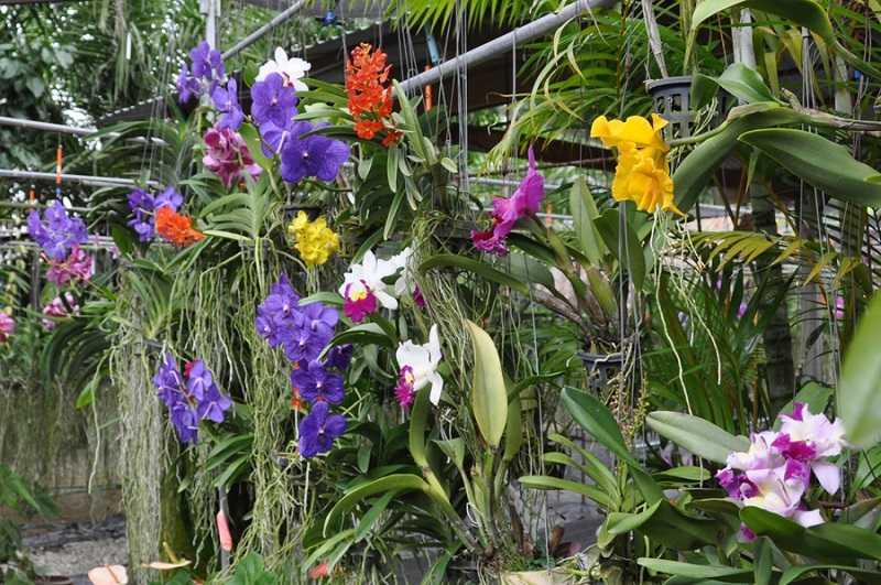 Пхукет Сад орхидей