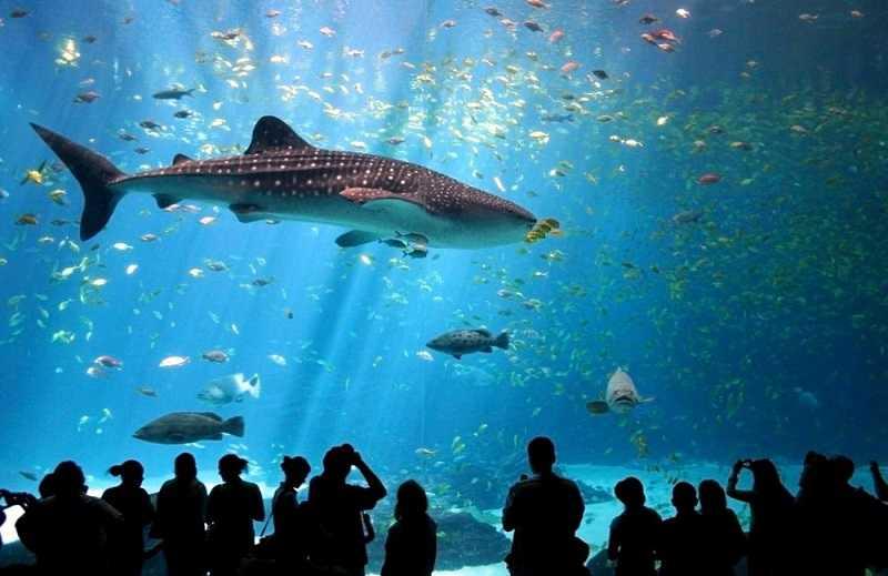 Пхукет аквариум