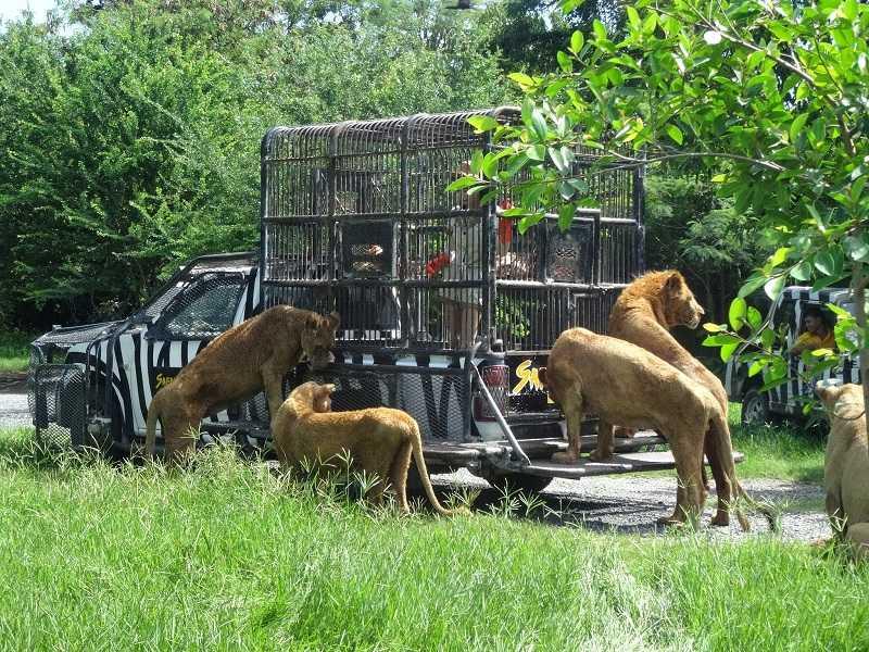 Сафари парк в Бангкоке кормление животных