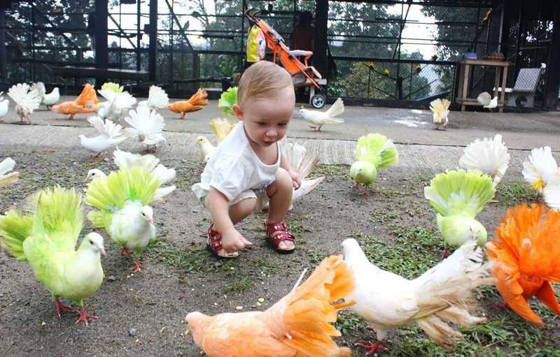 Самуи Парадайз Парк кормление животных