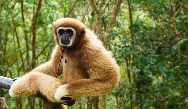 Самуи Парадайз Парк обезьяна