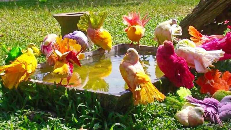Самуи Парадайз Парк птицы