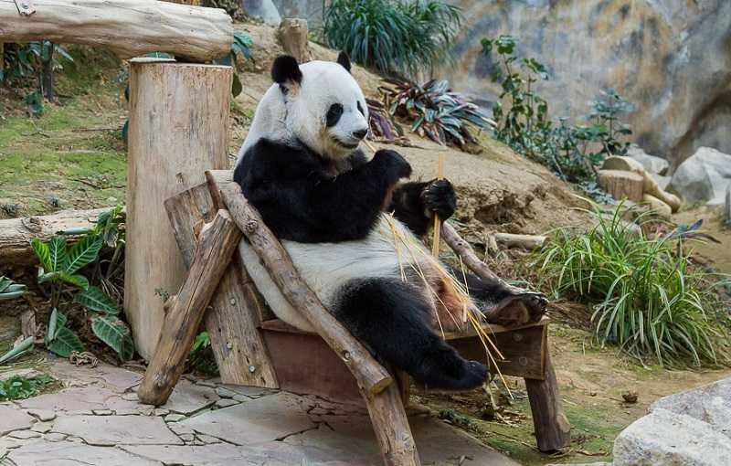 Таиланд город Чианг Май зоопарк