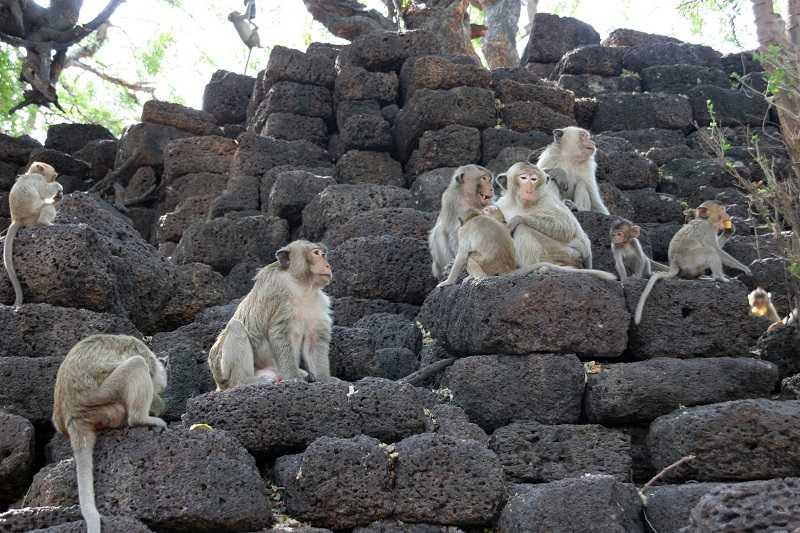 Таиланд город Лопбури обезьяны