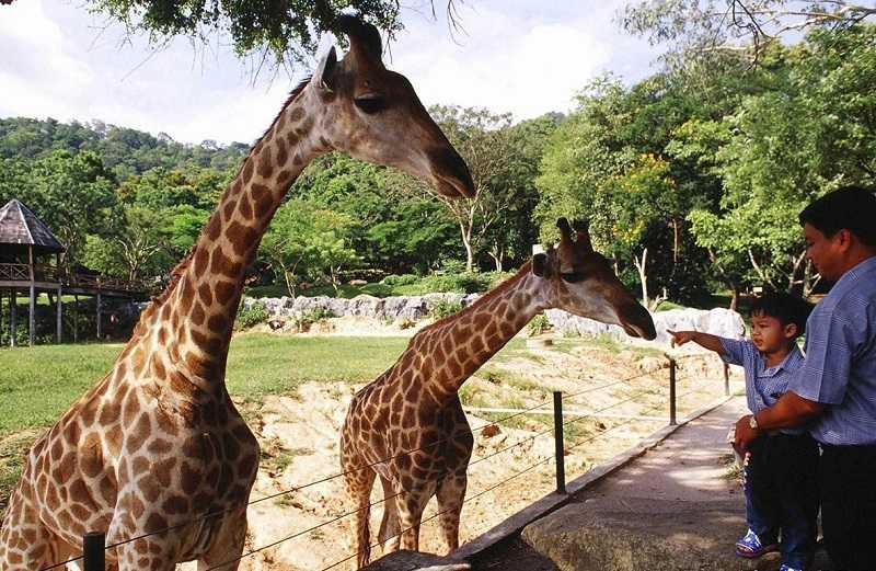 Тигровый зоопарк Сирача и зоопарк «Као Кео»