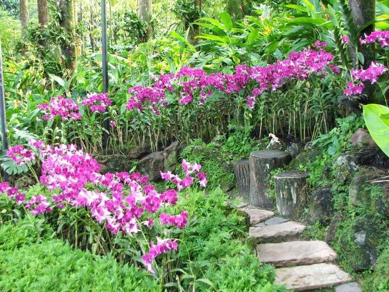 Вьетнам остров Орхидей1