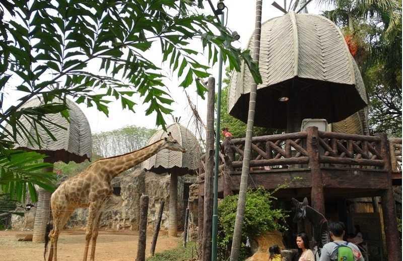 Зоопарк Дусит в Бангкоке бенгальские жирафы