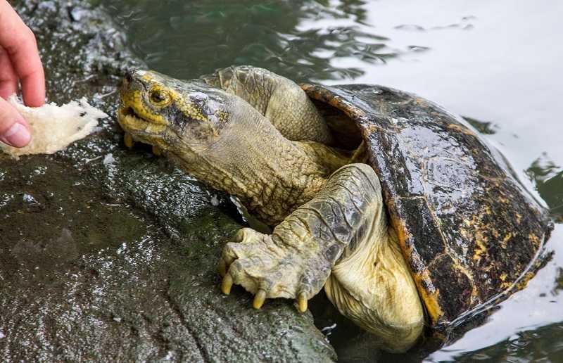 Зоопарк Дусит в Бангкоке черепахи