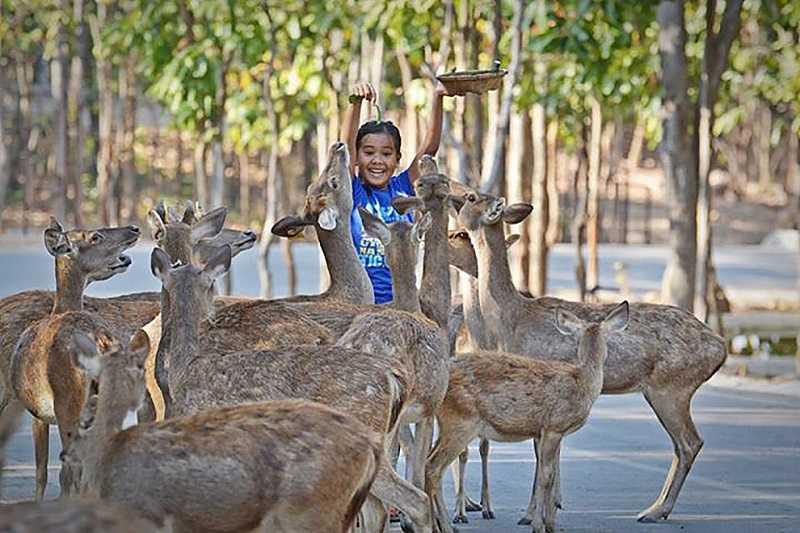 Зоопарк Дусит в Бангкоке1