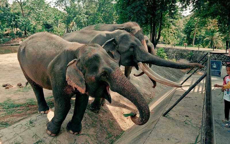 Зоопарки Паттайи Кхао Кхео африканская саванна