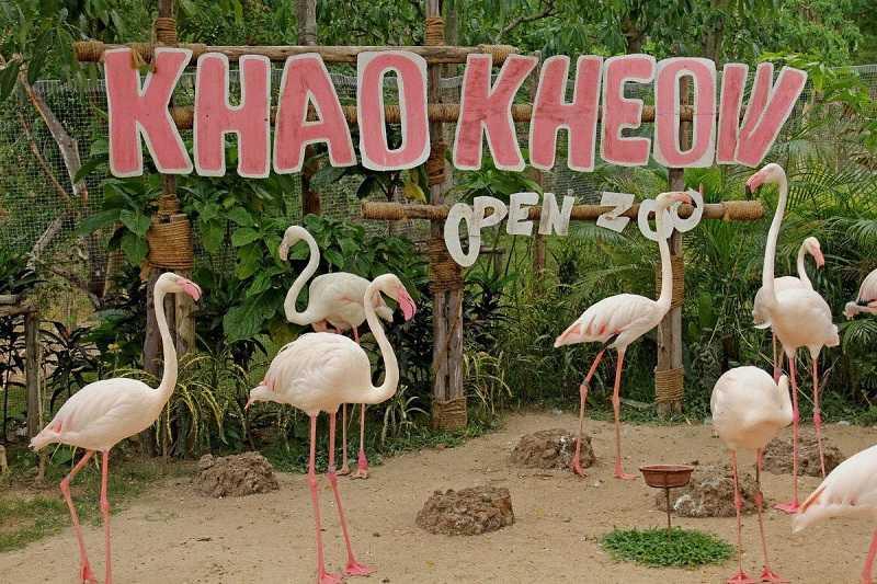 Зоопарки Паттайи Кхао Кхео