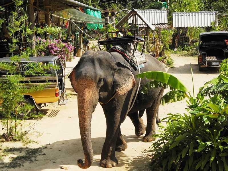 foto-e`kskursii-Derevnya-slonov-Tailand