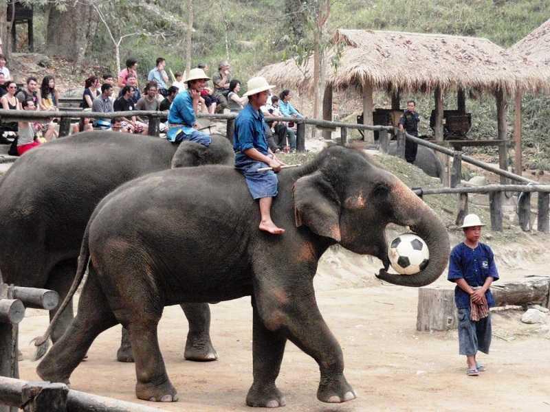 gay-travel-herald-Maesa-elephant-camp-Chiang-Mai-Thailand