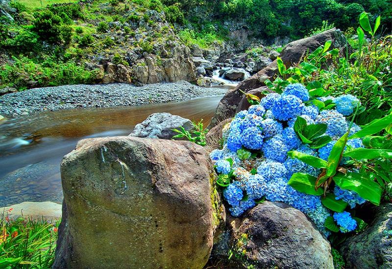 остров Флорес растения