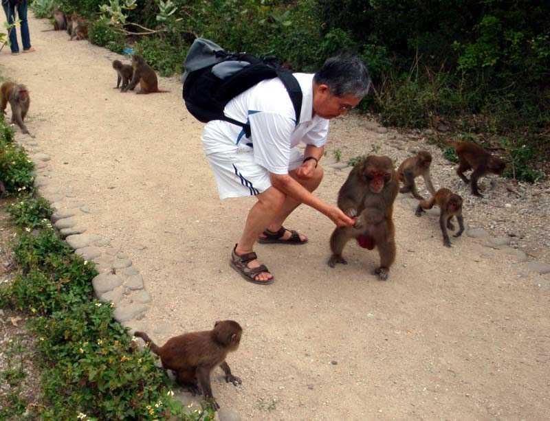 остров обезьян вьетнам кормление
