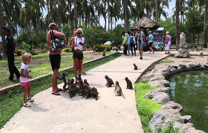 остров обезьян вьетнам