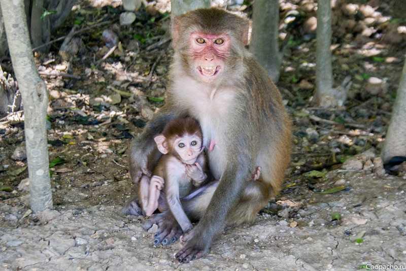 остров обезьян во вьетнаме