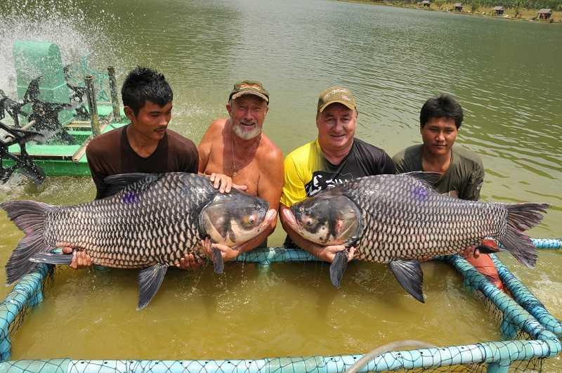 пхукет рыбалка на озерную крупную рыбу
