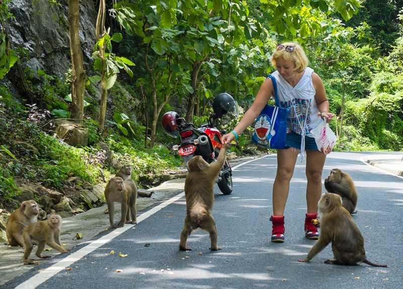 пхукете гора обезьян кормление животных