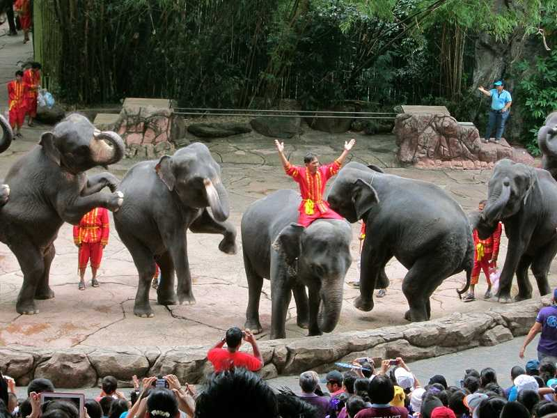 сафари парк в бангкоке шоу со слонами