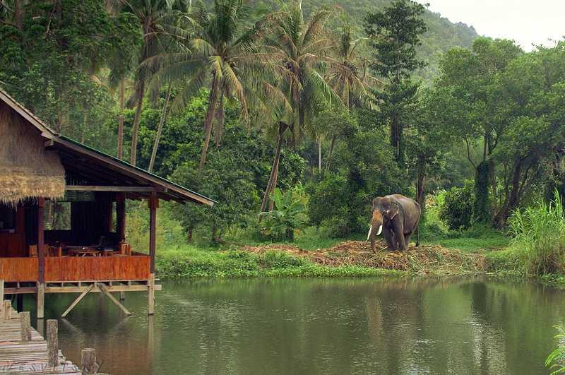 tailand-phangan-slon