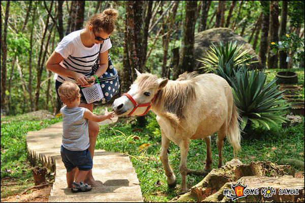 парадайз парк на самуи
