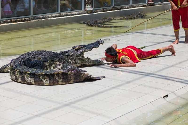 зоопарк на пхукете шоу с крокодилами