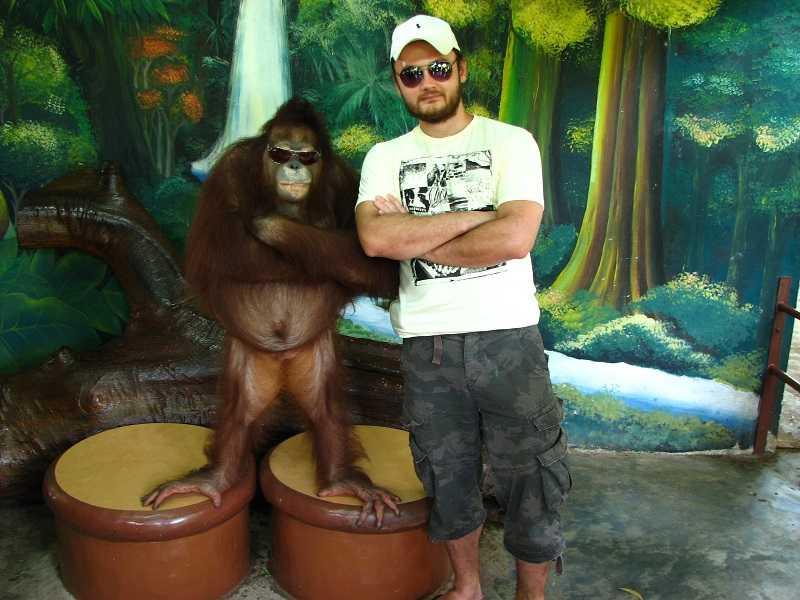 зоопарк на пхукете шоу с обезьянами
